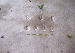 Bud Spud Bonsai Potato, Detail of Cover
